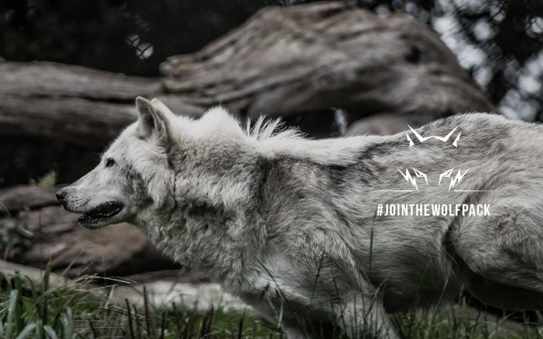 ¿Qué caracteriza a un hombre lobo?